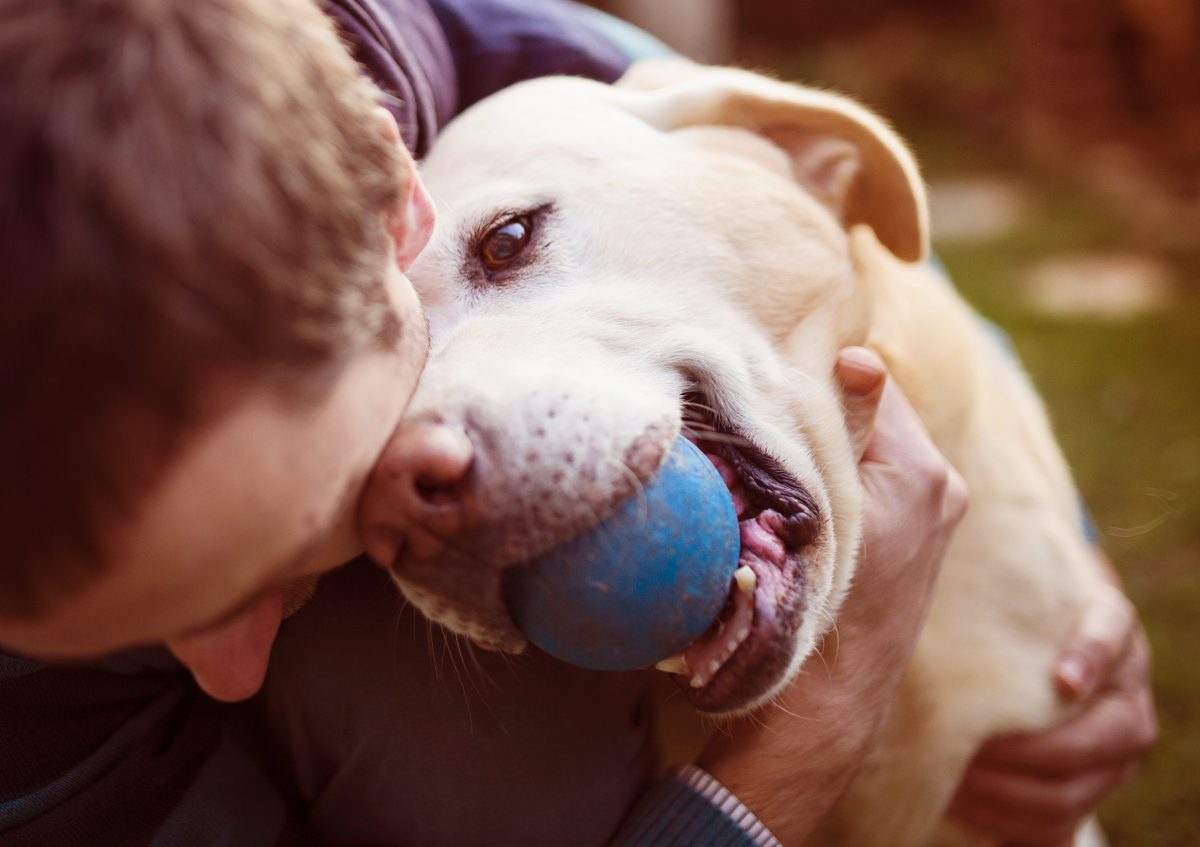 Bringing Your Canine Companion on the Road